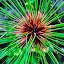 green floower by Philip Familara - Flowers Single Flower ( symetry, single, nature, pattern, green, lines, beauty in nature, flower,  )