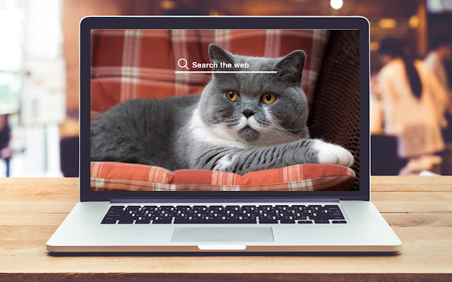 Shorthair Cat HD Wallpapers Game Theme