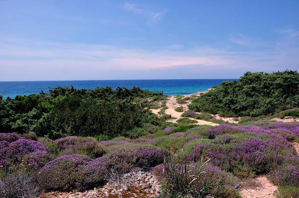 Una spiaggia che profuma di timo di benny48