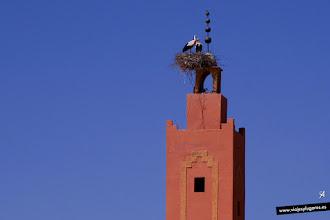 Photo: 7: En algunos de los poblados por los que pasamos vimos varias torres con Cigüeñas Blancas. Marruecos es uno de los principales destinos de las cigüeñas europeas para pasar el invierno. ¡Qué listas!