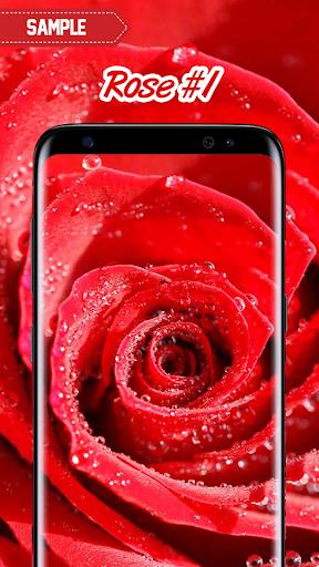 Rose Wallpaper  screenshots 2