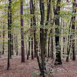 mačkovci by Dušan Gajšek - Nature Up Close Trees & Bushes
