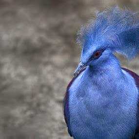 Blue Bird by Esther Pupung - Animals Birds