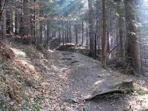 Photo: 08.W lesie w drodze na Sedlo Cerla.