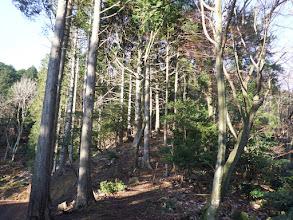 林道は左へ(このまま直登)