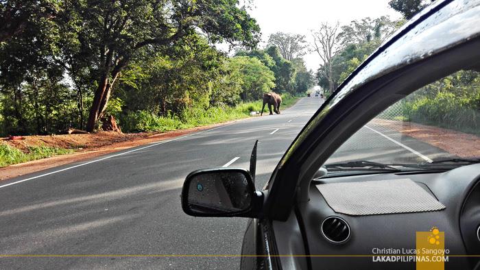 Sigiriya Wild Elephant Road