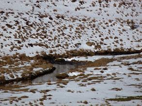 Photo: le ruisseau de la Dourbie