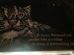 Photo: description for the Swimming Cat