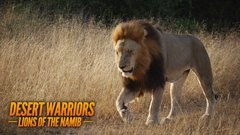 Desert Warriors: Lions of the Namib thumbnail