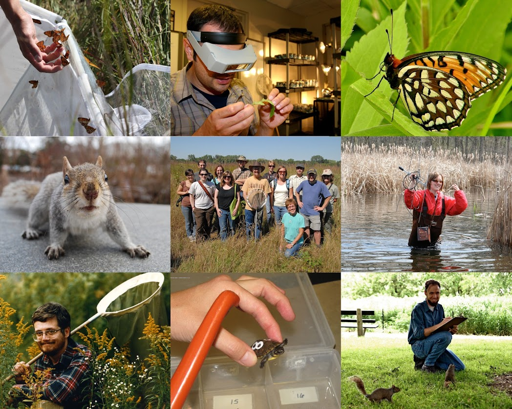Examples of Academy conservation work, 2001 to 2015, including butterflies, fieldwork and squirrels