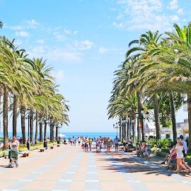 The Mediterranean Terrace by Joatan Berbel - City,  Street & Park  City Parks ( mediterranean, spain, nature et paysages, andalucia, park scene, terrace, nature photography, nerja )