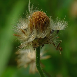 by Alvin Ngow - Nature Up Close Other plants ( asia plants, close up, macro, plants, wild plants, flora, garden, tropical plants, wild, birdbotany, flower,  )