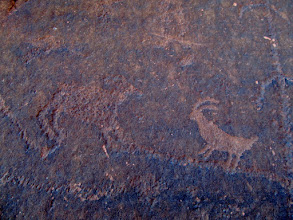 Photo: Sheep petroglyphs of differing ages