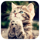 Cute Cat live wallpaper by Amazing Live Wallpaperss Apk