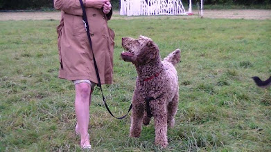 Photo: Beautiful Brian Labradoodle who won 1st prize in Personality of the day