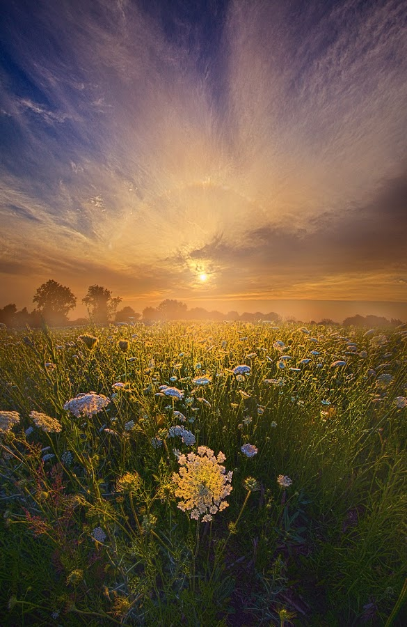Echos The Sound Of Silence by Phil Koch - Landscapes Sunsets & Sunrises ( vertical, travel, yellow, sky, nature, weather, light, orange, colors, twilight, art, mood, journey, horizon, portrait, country, dawn, environment, season, horiz  ons, serene, outdoors, lines, natural, inspirational, wisconsin, ray, landscape, sun, photography, life, emotions, horizons, inspired, clouds, office, park, heaven, beautiful, scenic, living, morning, field, blue, sunset, amber, peace, meadow, summer, beam, sunrise, earth,  )