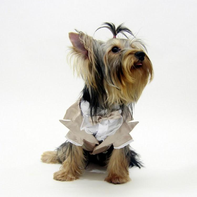 [Valentine PROMO] Jaiden Dog Tuxedo by Pets Manic