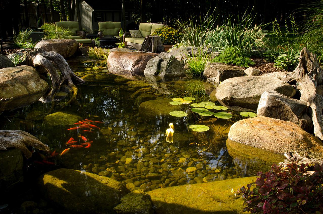 Photo: Backyard Goldfish Pond in Montville, NJ