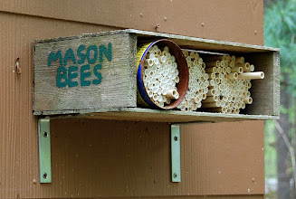 Photo: ... or just watch the bees.