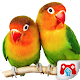 Educational Game Real Birds v1.0.0