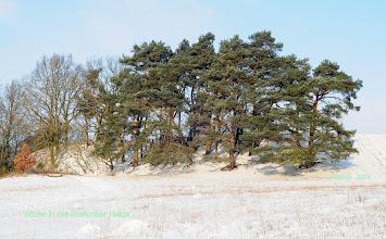 Photo: Winter in der Rostocker Heide