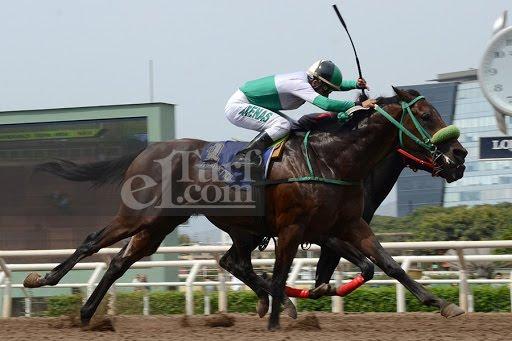 Native Pegasus (Pegasus Wind) conquistó Condicional (1000m-Arena-MONT). - Staff ElTurf.com