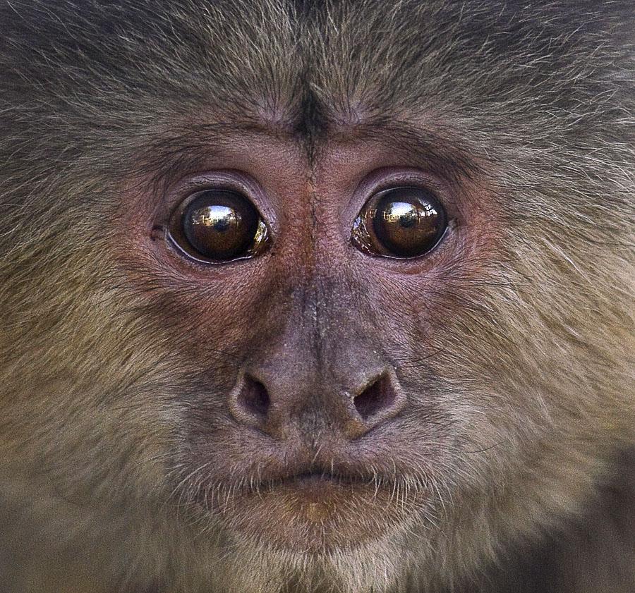 I wonder by Cheri McEachin - Animals Other Mammals