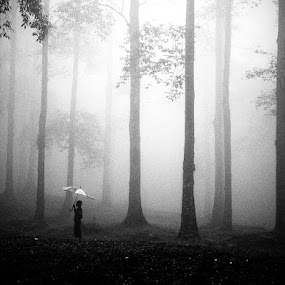 After The Rain by Hengki Lee - Landscapes Forests