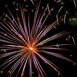 Firework of Art by Tierra McShane - Public Holidays July 4th ( firework, celebrate, light, festive, pride, fourth of july )