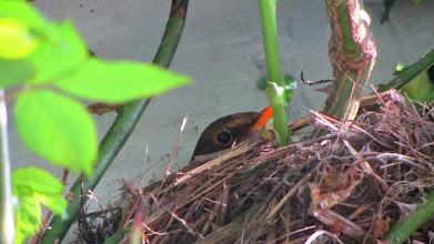 Photo: Im Nest über der Haustür