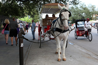 Photo: Jackson Square http://ow.ly/caYpY