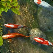 Koi Fish 1 live wallpaper