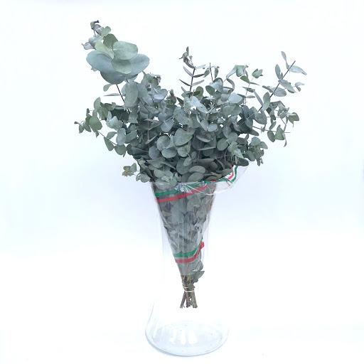 flores eucalipto bebe Eucalipto