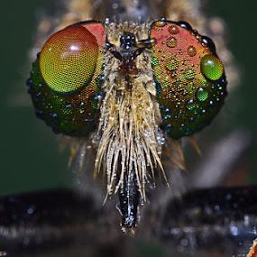 by Dhanu Wijaya - Animals Insects & Spiders