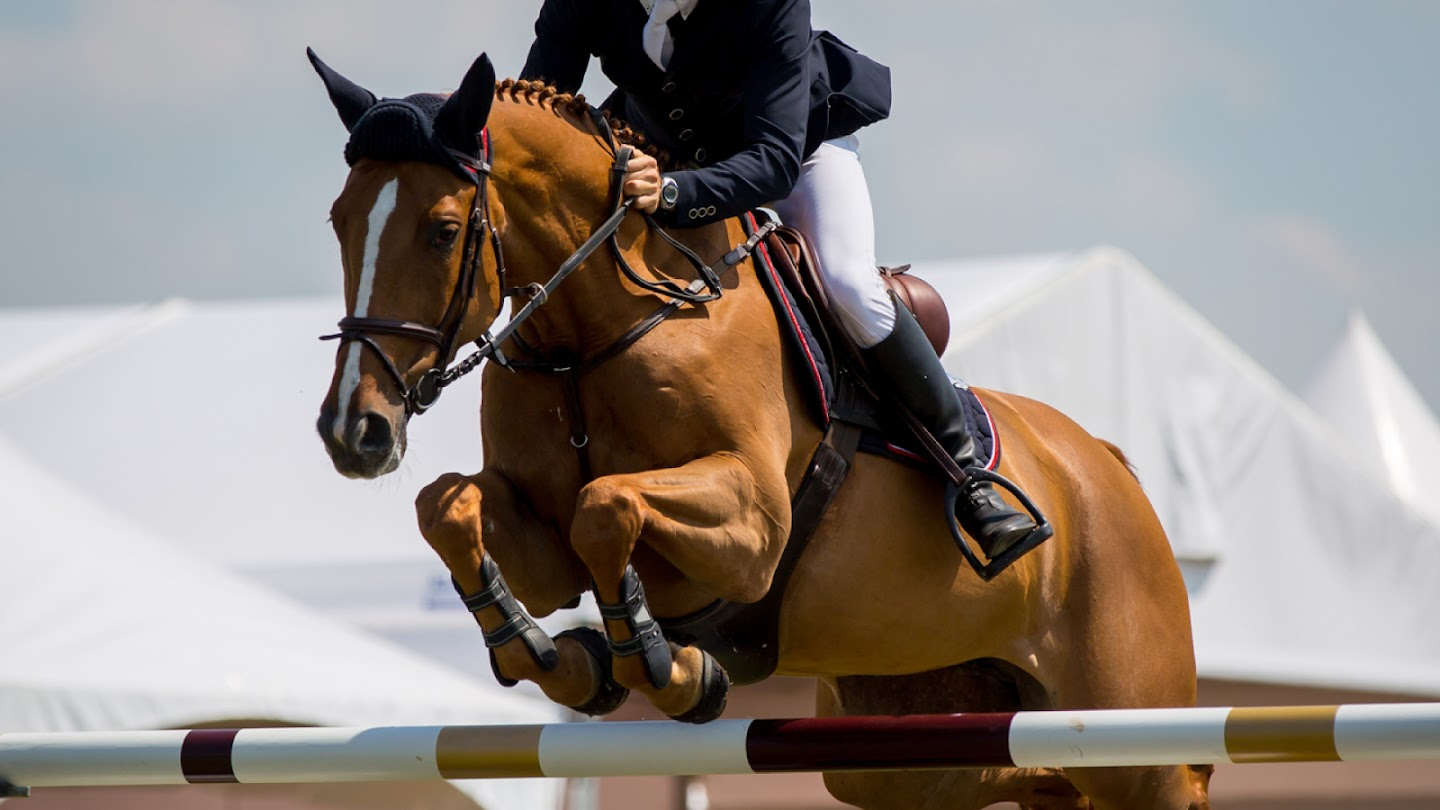 Watch FEI Nations Cup live