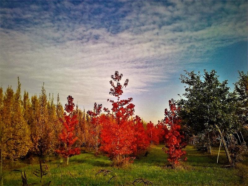 arcobaleno  dell bosco di Liliana H.