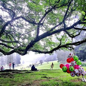 selling balloons in the garden Cibodas by Krus Haryanto - Instagram & Mobile Other