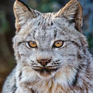 Lynx-35.jpg