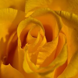 by LADOCKi Elvira - Flowers Single Flower ( garden plants floral flower nature )