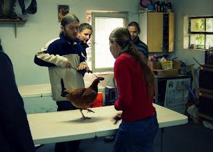 Photo: Dopiero potem do akcji wkracza Gosia z Kubą i kura-ochotniczka :)