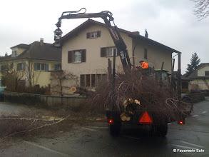 Photo: Der Baum wird von der Strasse entfernt.