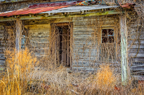 Abandoned by Robert Mullen - Buildings & Architecture Decaying & Abandoned ( old house, home, cabin, overgrown, weeds, house,  )