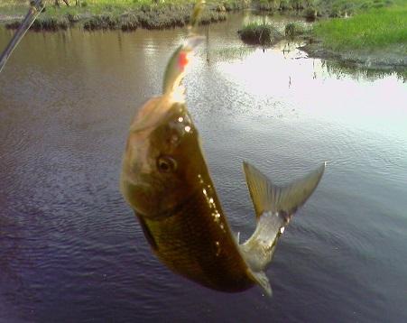 fish-on-hook.jpg
