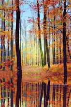 Photo: Fall Mirror.