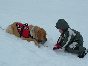 Photo: Costner is a Golden Retriever service dog for a boy with Autism