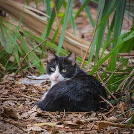 Relaxing by Lourdes Olartecoechea - Animals - Cats Portraits ( gato, cats, animals, cat, feral cat, park, feline )