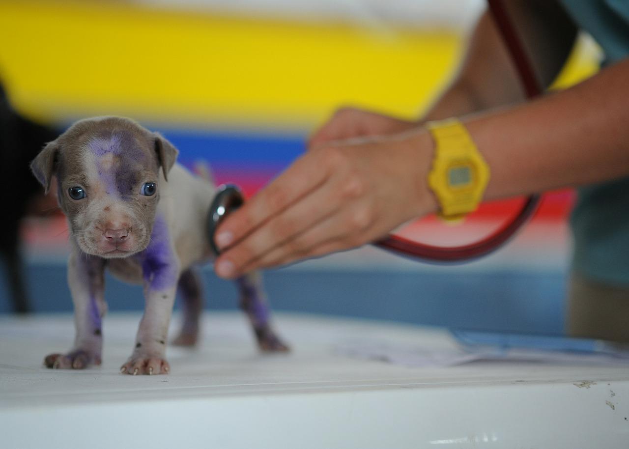 Aprende a cuidar a tu cachorro