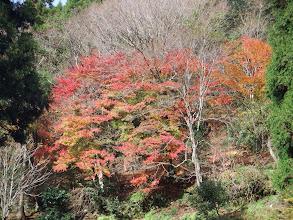 綺麗な紅葉が