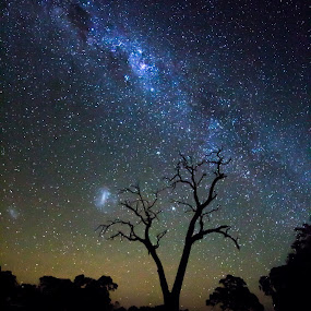 Tree silhouette by Gill Fry - Landscapes Starscapes ( tree, stars, night, gill fry, milky way,  )