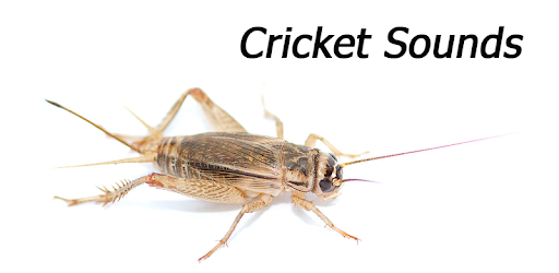 cricket insect ringtone free download